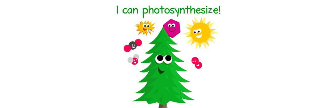 There's More to Photosynthesis than just Plants, Sun and Carbon Dioxide