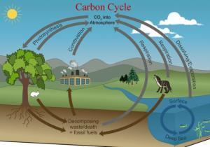 Water Cycle – Grade 7 Science Worksheet